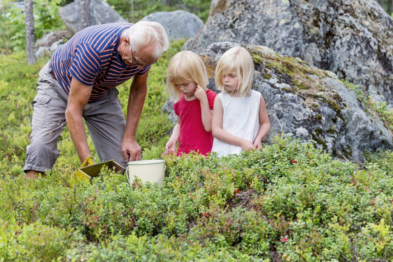 Eldre mann plukker blåbær sammen med to småjenter. Foto: Jörgen Wiklund/Scandinav