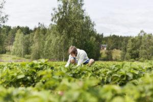 Ungdom som jobber i en åker med mye grønt.